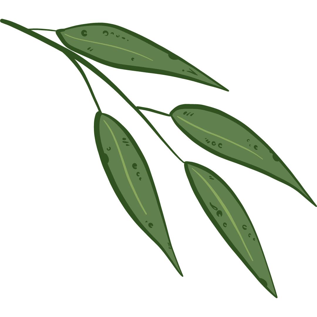 """<img src=""""Sans-titre-81.png"""" alt=""""eucalyptus"""">"""